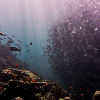 KARMA supportet Ozean-Schutz-Projekte